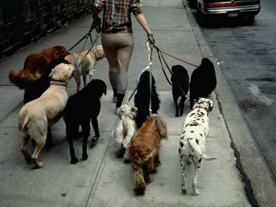 Pet Sitters and Dog Day-Care