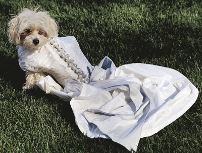 Lucky getting ready for the summer wedding season!