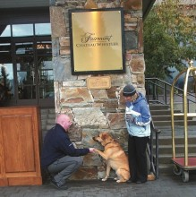 Fairmount Hotels welcomes dogs worldwide!
