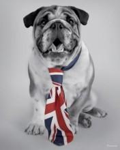 british-dog-176x220