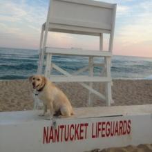 nantucket dog lifeguard beach