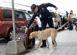 airport bomb dog luggage