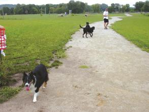 Iowa's Cheyenne Off-Leash Dog Park gives pups a           well-deserved dose of freedom.