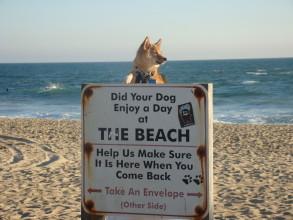 Huntington Beach, dog on beach, sign