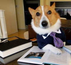 This Corgie knows how to land a job after college! Take some advice from him and companies will be begging to hire you!