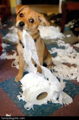 funny dog pictures : http://www.funnydogsite.com/