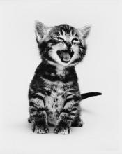Kitty Black & White