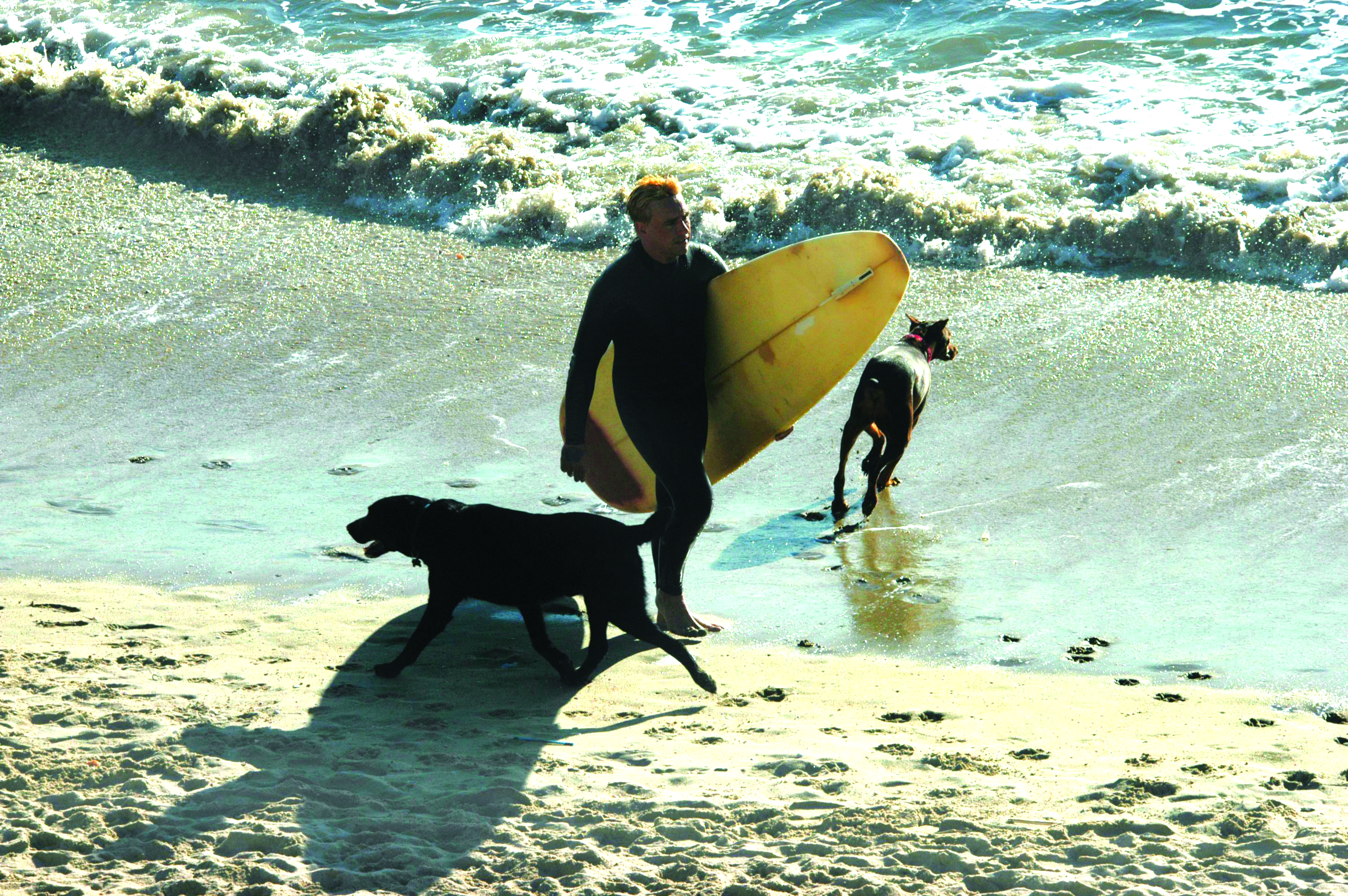 Surfing dogs and pet parent enjoy a sunny Huntington Beach afternoon.