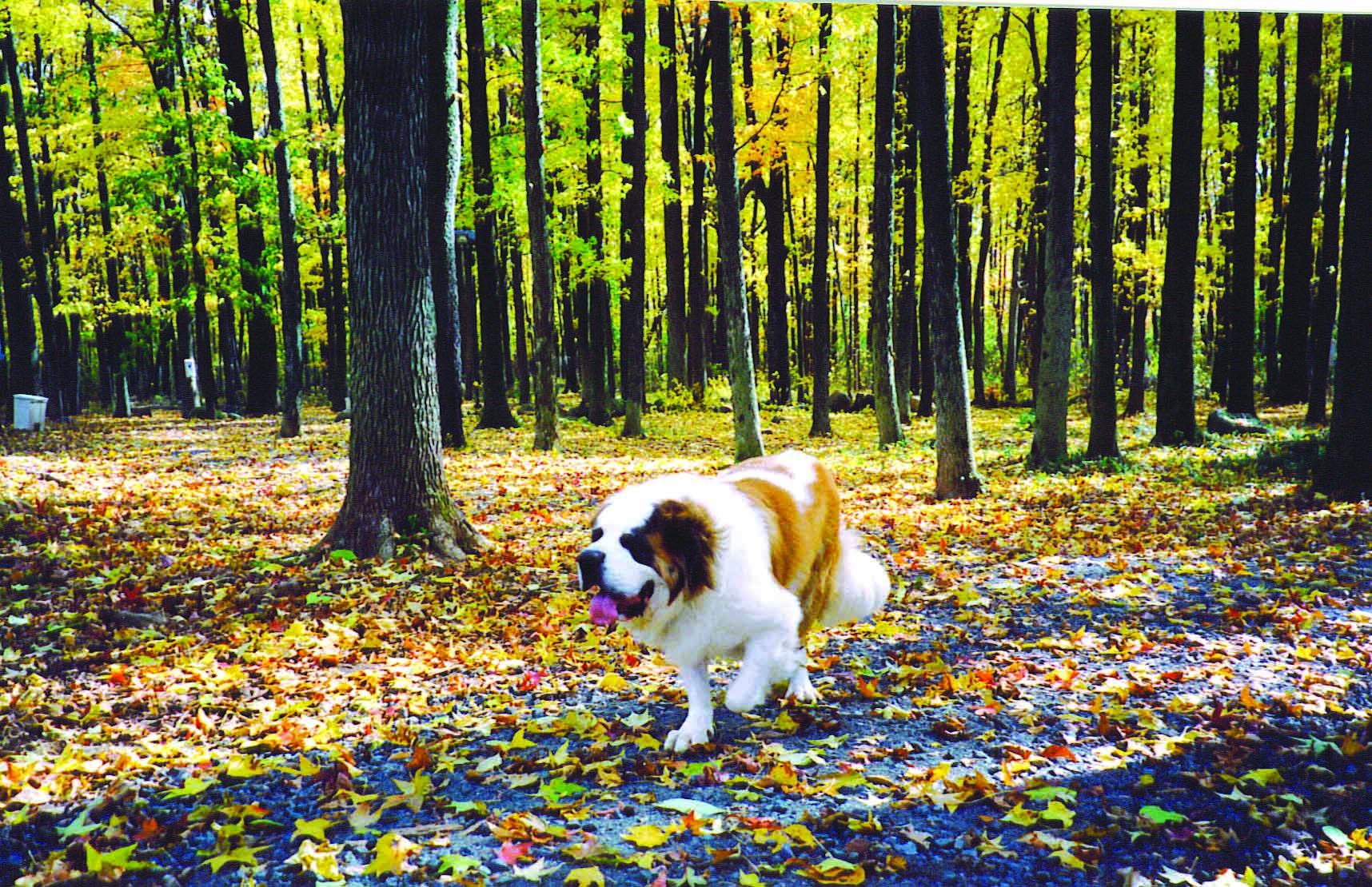 A furry fall adventure.