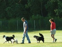Healthiest Exercise - A walk with your dog!