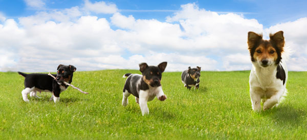 Happy Earth Day! It's Time To Practice Eco-Friendly Pet-Parenting!