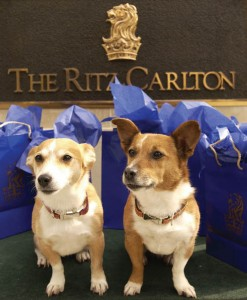 Closeup-of-Dogs-on-Bellcart-with-Shopping-Bags
