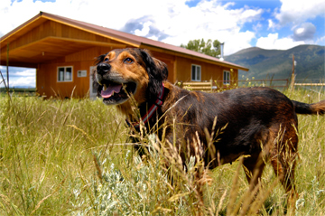 A Dog on the ranch