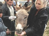 Donkeys in the Holyland