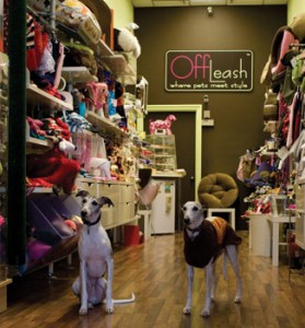 OffLeash is where pets meet with style, and you may run into a Whippet or two. Photos by Ian Vorster and Cassidy Zellmann, Brooks Institute of Photography