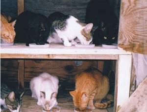Photos courtesy P.A.W. Cat Sanctuary & Humane Society