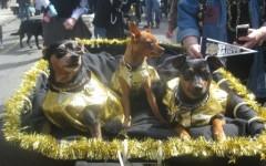 Barkus Dogs!