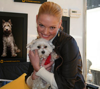 Actress Katherine Heigl Has JUST ONE Request To Help Animals!