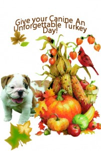 Thanksgiving and Pets! Have a safe Turkey Day!