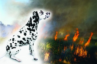 Follow the Dalmatian to fire safety!