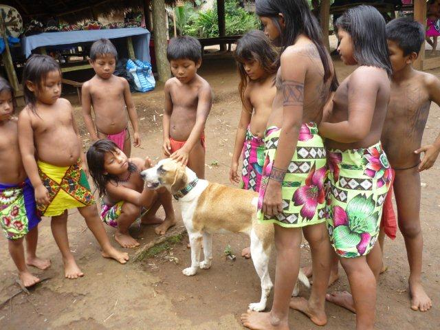 Indigenous Embera Tribe children play with an adorable homeless dog!