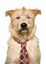 dog, doggie tie, business dog, father's day, animal fair, Wendy Diamond