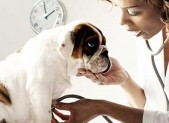Planning for Veterinary Exams