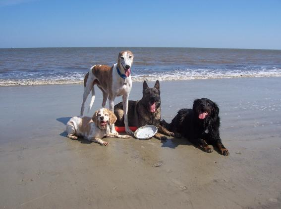 dog beach new smyrna
