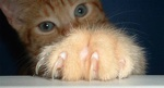 Cat Scratch 101: How to Have Harmony in the Home while Keeping the Claws