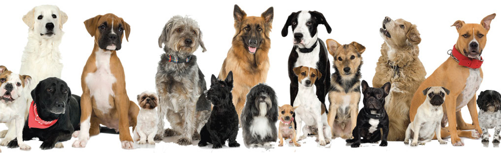 In Honor Of Westminster – Tips To Finding A Responsible Breeder