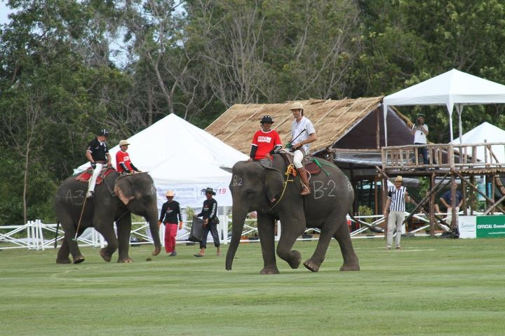 Endangered Elephants in Thailand - Playing Polo to survive