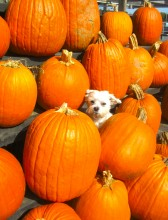 Howloween! Tips on keeping your pets safe!