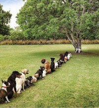 The Funniest Dog photo - Dogs in line for the toilet tree!