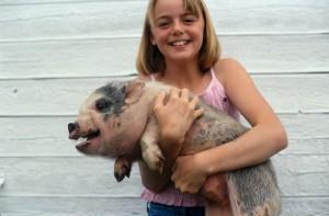 You, Your Pet & The Swine Flu
