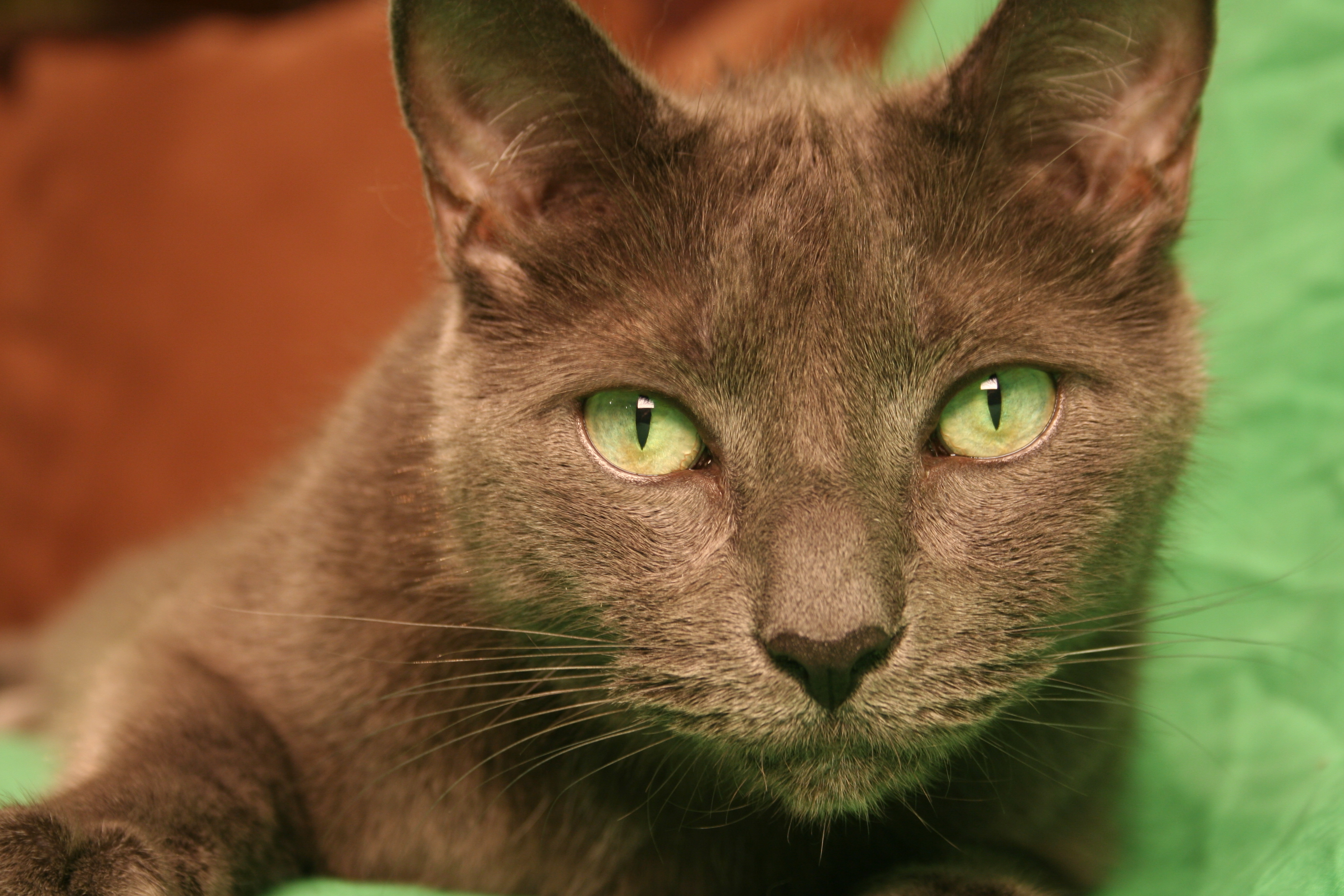 To Claw or Not to Declaw – A Cats Dilemma