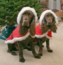 Merry Christmas! Holiday Santa Dogs!