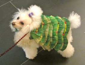 Dogs Dressed in Holiday couture to help homeless animals!