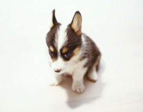 Preventing Puppies From Parvo