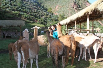 GUANACOS SURROUND WENDY!