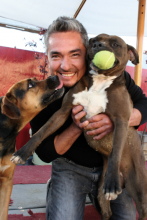Cesar Millan plays with a pair of dogs undergoing rehabilitation at the Dog Psychology Center