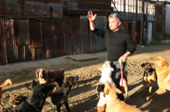 Cesar guides a group of dogs at the DSC
