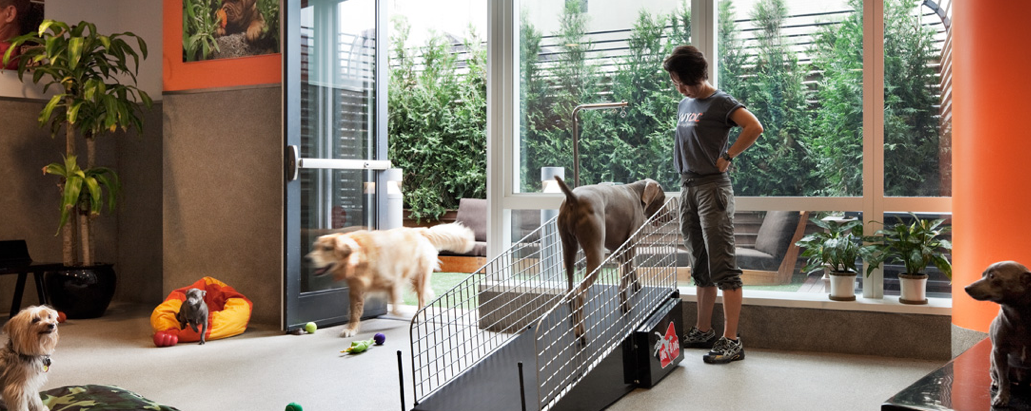 How to Keep Renting Pet-Friendly, Even If Your Landlord Isn't!