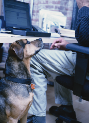 A dog can be a perfect work-day companion