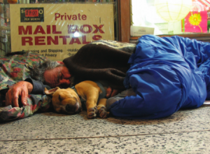Estimates show that 10-15% of America's homeless have a dog or cat