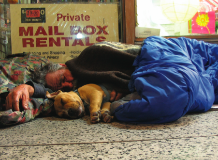 Home is Where the Heart is: Animals Find Compassion on the Streets