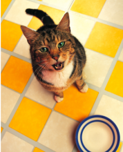 Cats may be telling you more than you think