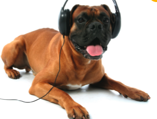 Calm your pooch down with a song