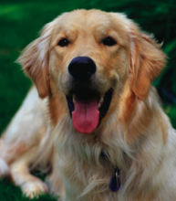 Care for your arthritic dog