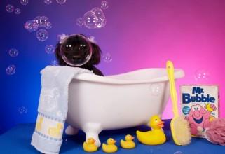 Dog Taking a Bubble Bath! - Photo by Ren Netherland
