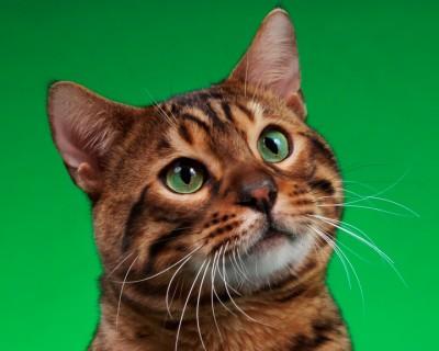 Cat Head GreenP1131326